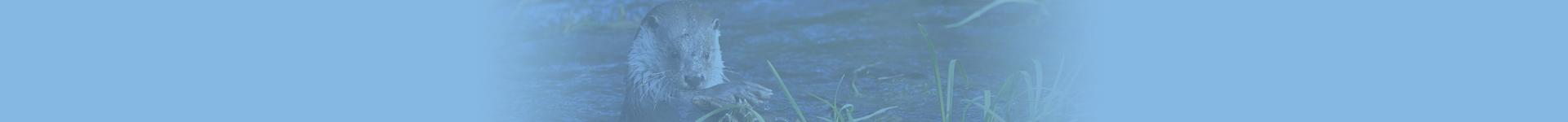 Industriewater Eerbeek